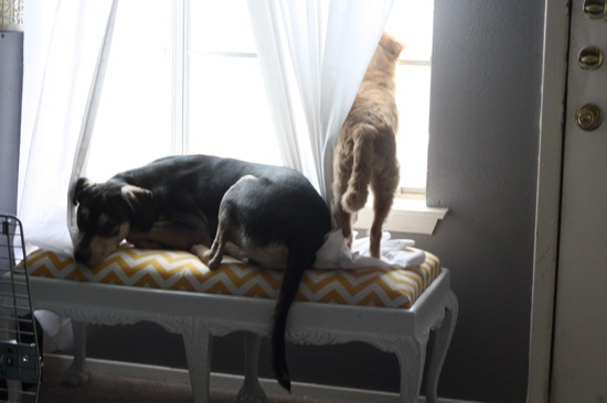 How to take an old Craigslist find and turn it into the perfect spot for your dog or cat to rest while they look out the window! It's a gorgeous solution, and it's great for the humans in the house too!