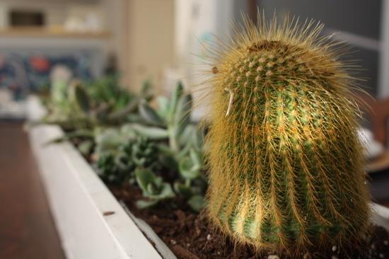 Succulent centerpiece tutorial