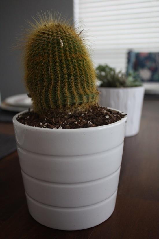Ikea pot succulent