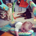 Dogs and the Baby