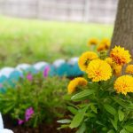 10 Affordable Backyard Upgrades