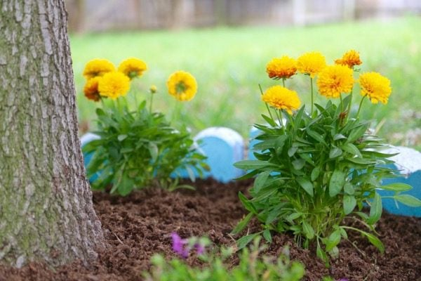 Do you want to WANT to spend more time in your backyard? Try making it a little prettier with some flowers! This post will show you how to brighten up your backyard with some color and fun by building a DIY border garden around a tree! It's quick, affordable, and it makes a big impact!