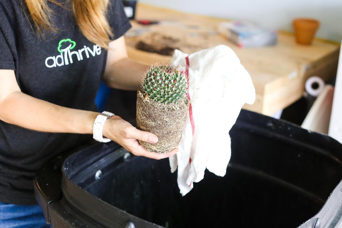 How to get a cactus out of a pot