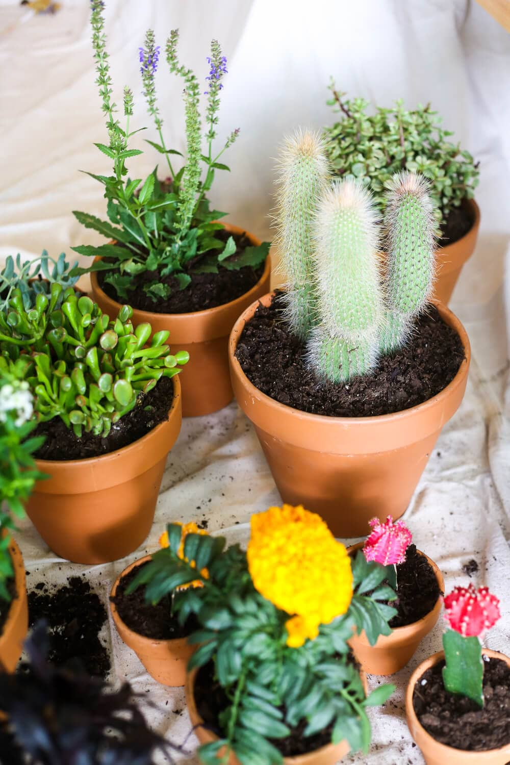 Tips for planting succulents