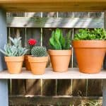 DIY Cinderblock Plant Shelves