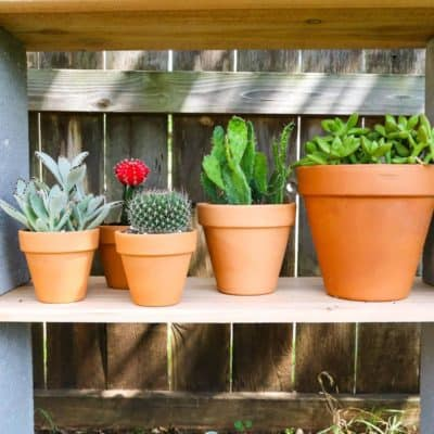 How to build simple cinderblock shelves to hold your plants. A really quick and simple plant stand idea - perfect for herb gardens, succulents, or whatever plants you need a space for!