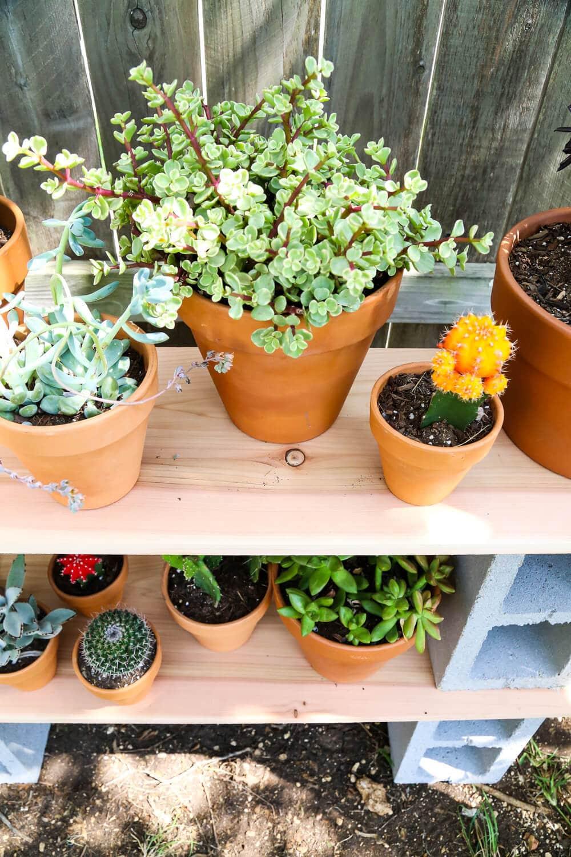 Easy outdoor plant shelf