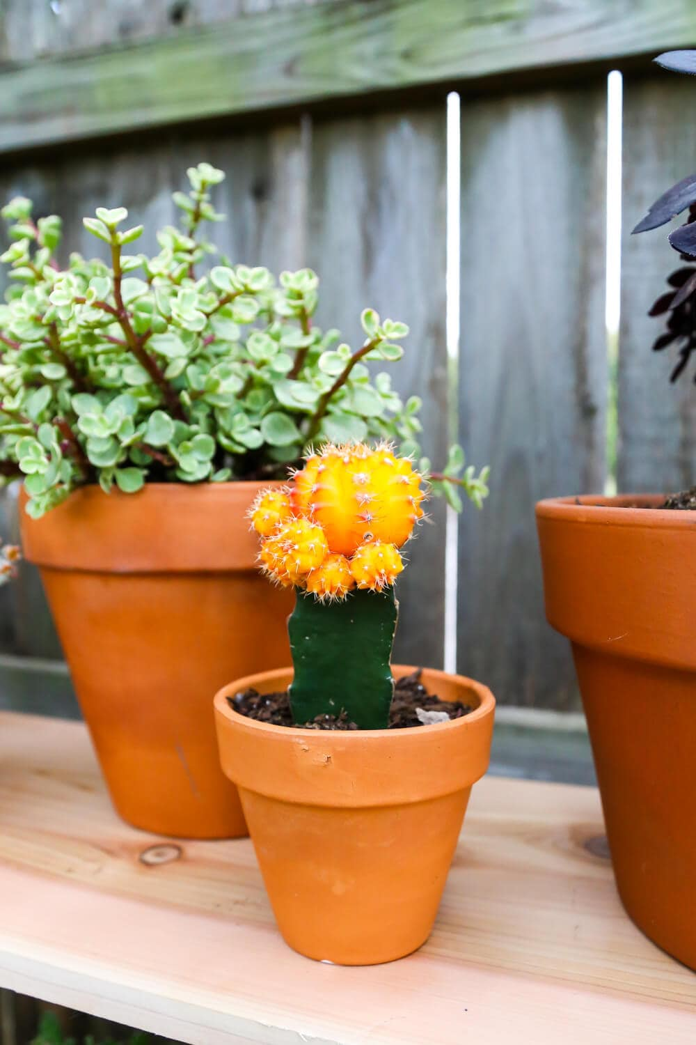 Easy outdoor plant display