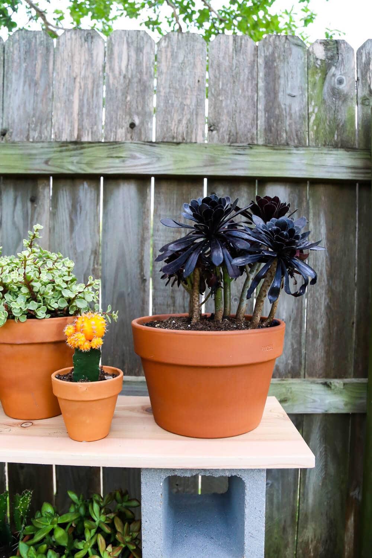 Cinder block shelves with succulents
