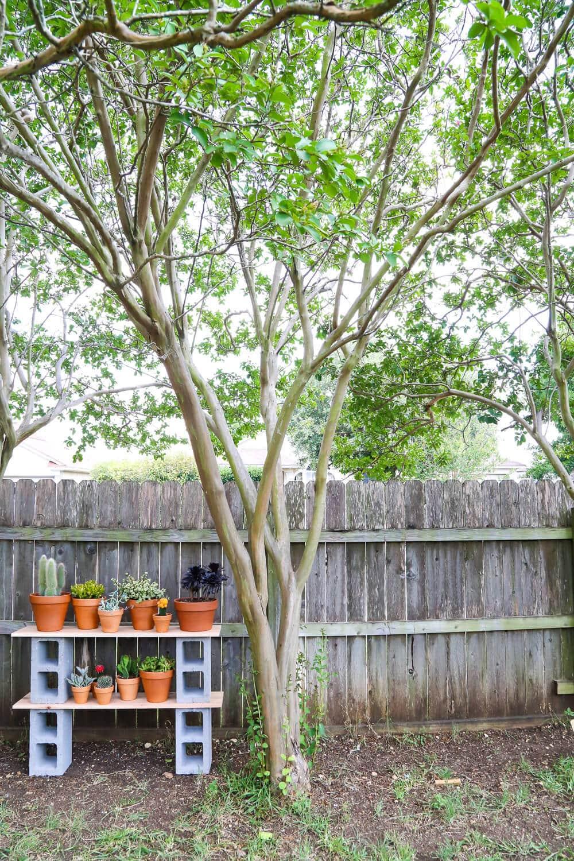 Easy cinder block shelves for plants