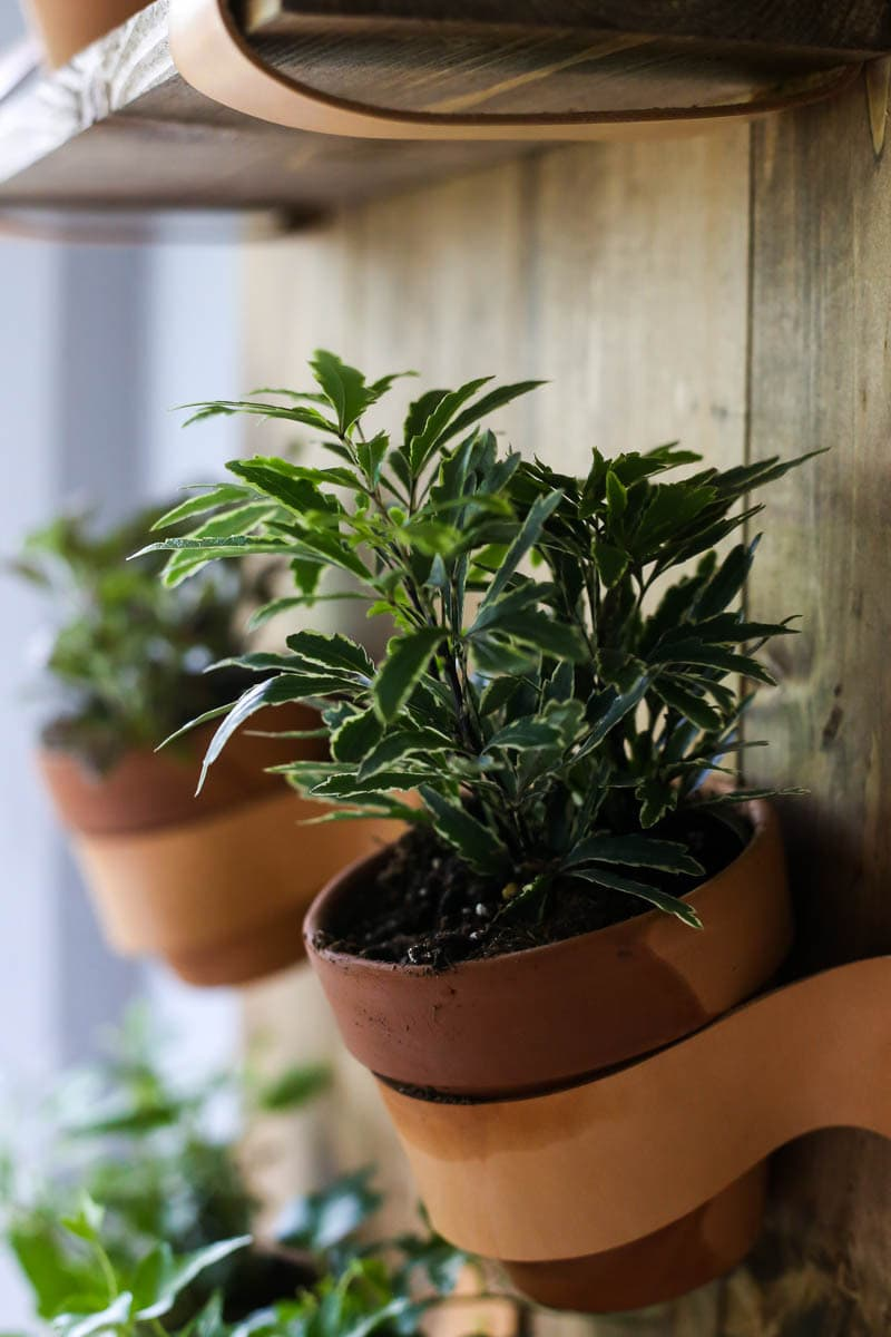 Tips for creating a vertical wall planter in your home