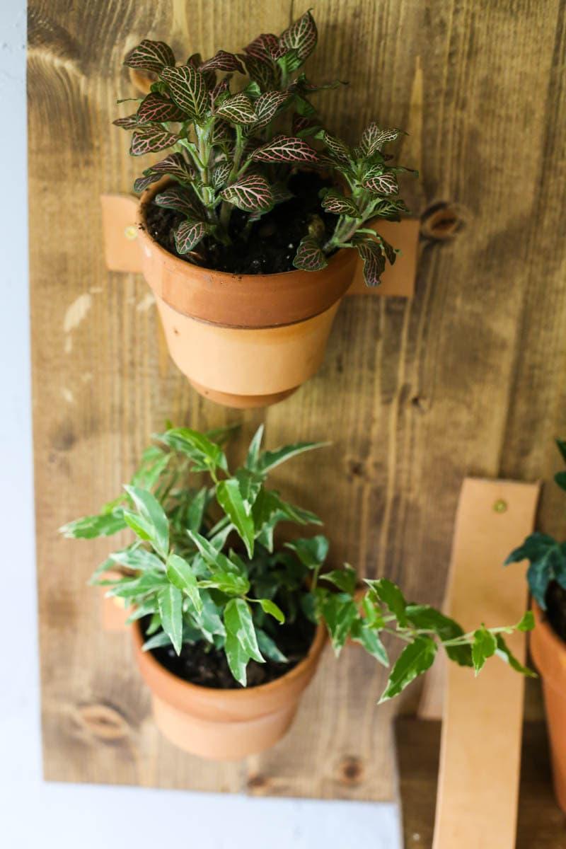 DIY wall plant shelf