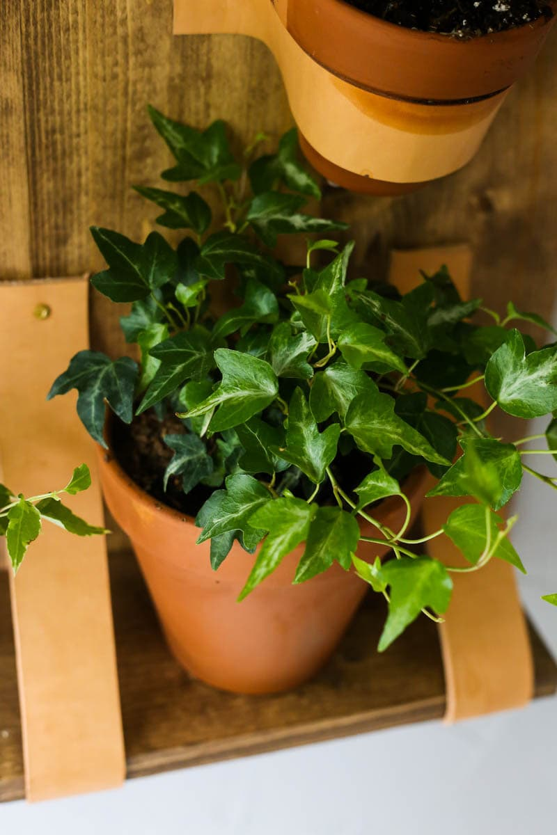 Plant in kitchen on DIY plant shelf