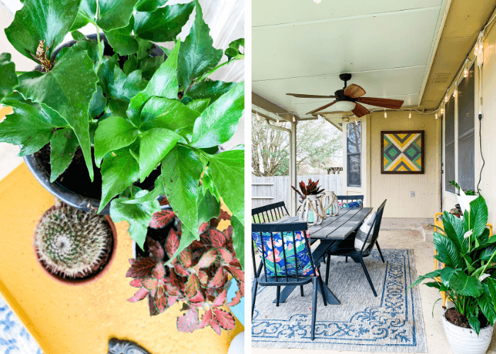 collage of plants and back patio
