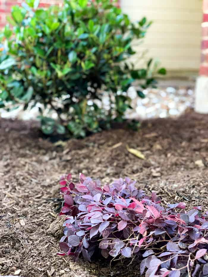 plants that have low water requirements