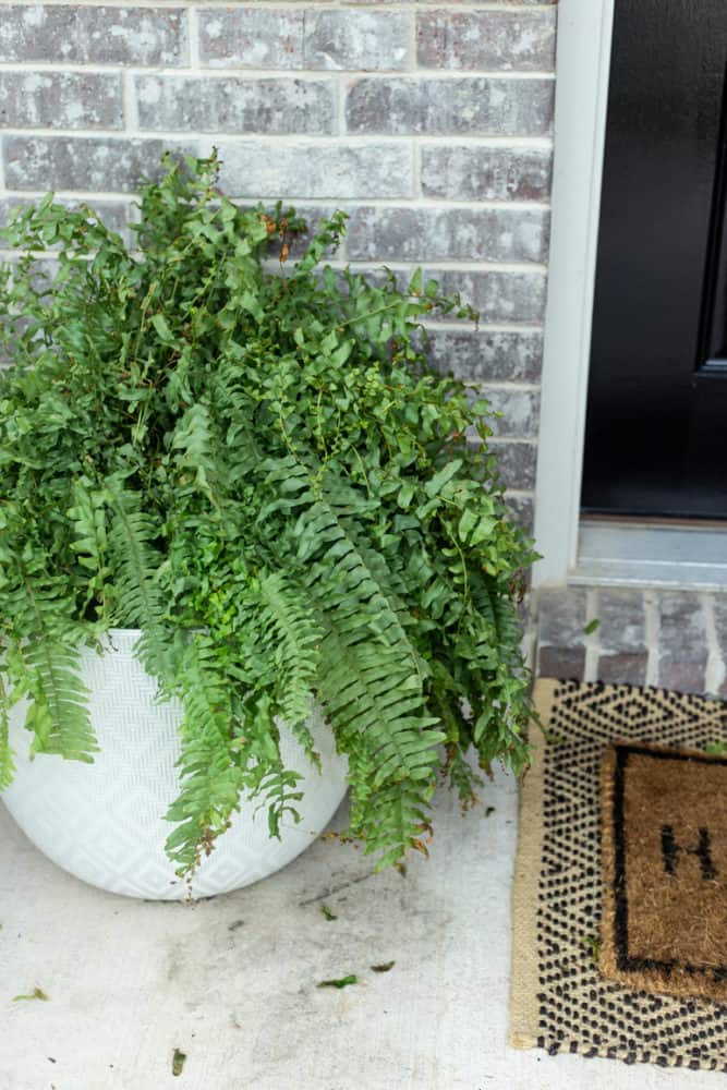 Large planter with a fern on a front porch