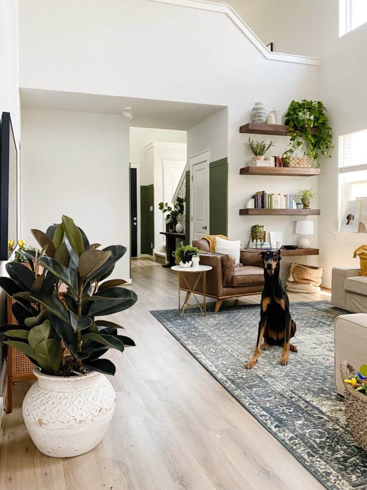 living room full of plants with a doberman sitting on the rug
